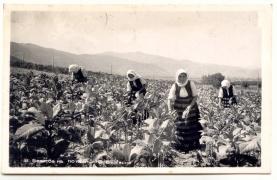 Архив Изгубената България Тютюноберачки